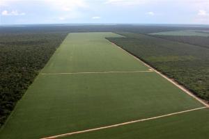 Soja en el Amazonas
